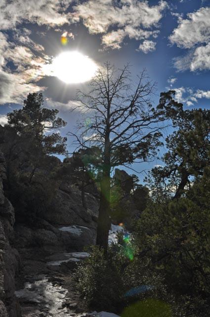 Beauty Trumps Mishap at Chiricahua