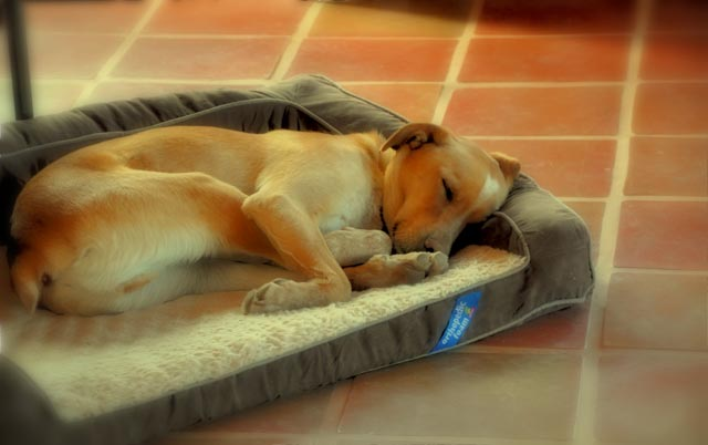 Photo of the Day: Sam the Wonder Pup in Repose  Photo of the Day: Sam the Wonder Pup in Repose