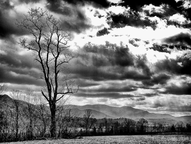 One Stark Tree at Cades Cove, Tennessee