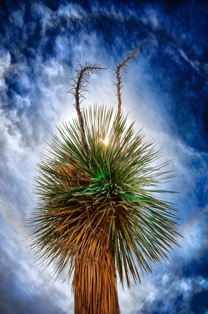 Arizona Skies at the Desert Museum in Tucson