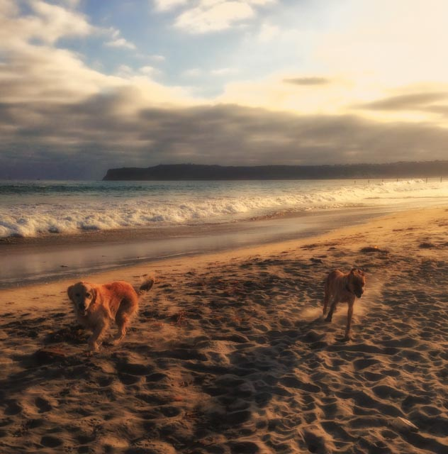 Sam and Jack Take Dog Beach in Coronado