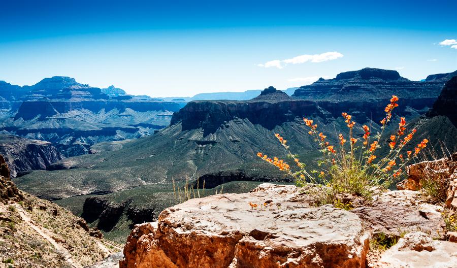 Grand Canyon Flora