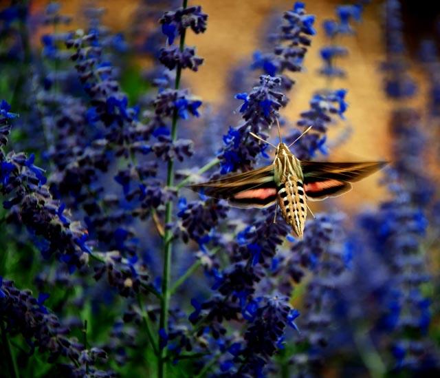 Mystery Insects of Taos  Mystery Insects of Taos