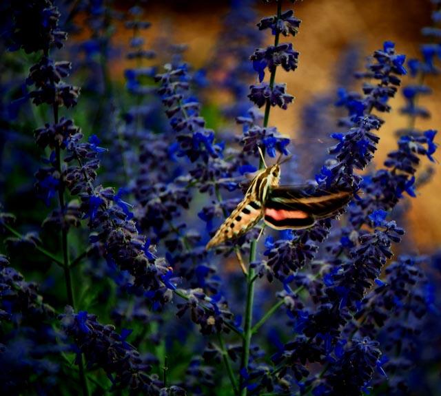 Mystery Insects of Taos  Mystery Insects of Taos  Mystery Insects of Taos