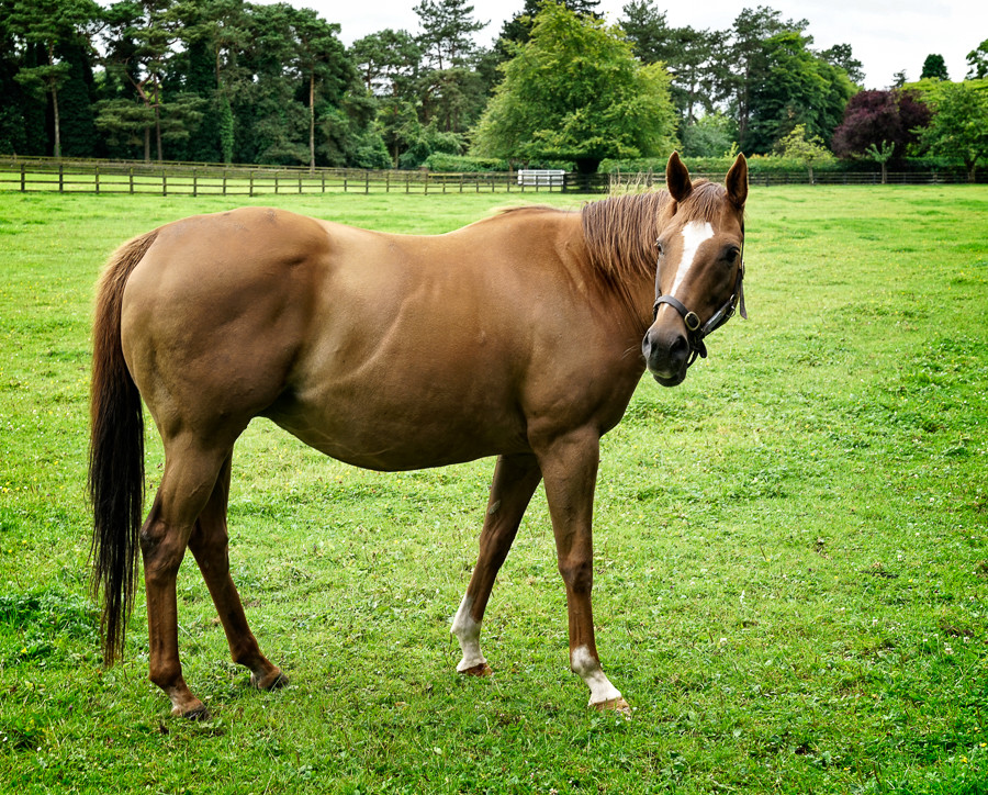 Mother-horse-2.jpg