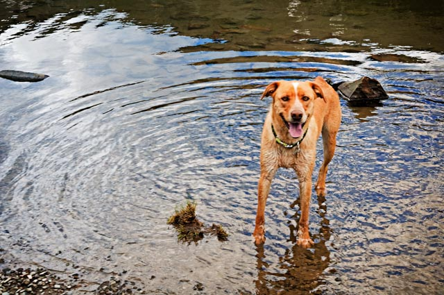 The Happiest Dog Around