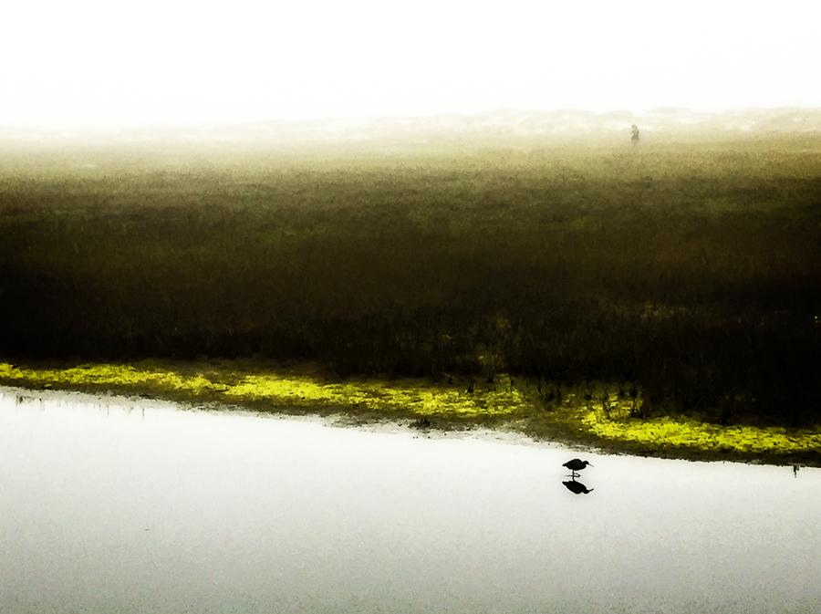 river-bird.jpg